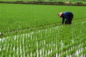 Vietnam etf