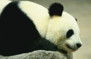 Kiinan osakemarkkinat karhumarkkinat