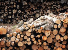 saha paperi tukki puu