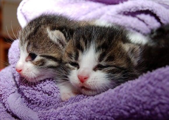 osinkosijoittaja-kissanpäivät-042015