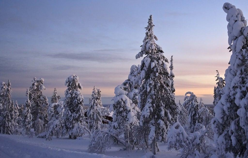 talvi joulu