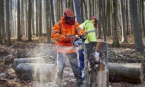 työ saha metsä puu tukkipuu talous