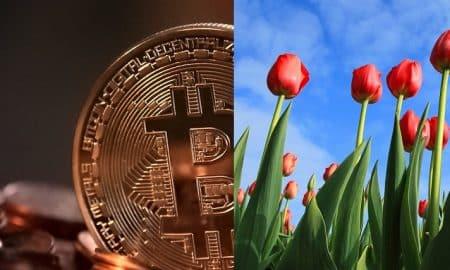 bitcoin tulppaanimania kryptovaluutta bittiraha