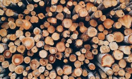 tukkipuu puu tukit metsäteollisuus talous