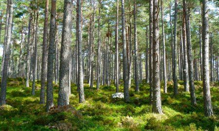 metsä metsäomaisuus metsäsijoittaminen metsänhoito talous