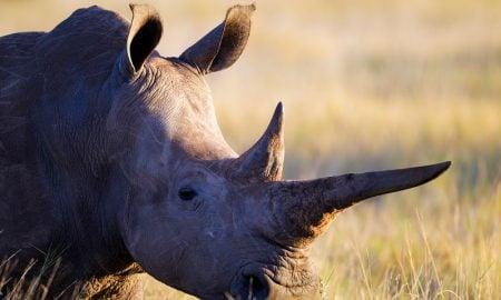 sarvikuono Afrikka eläimet