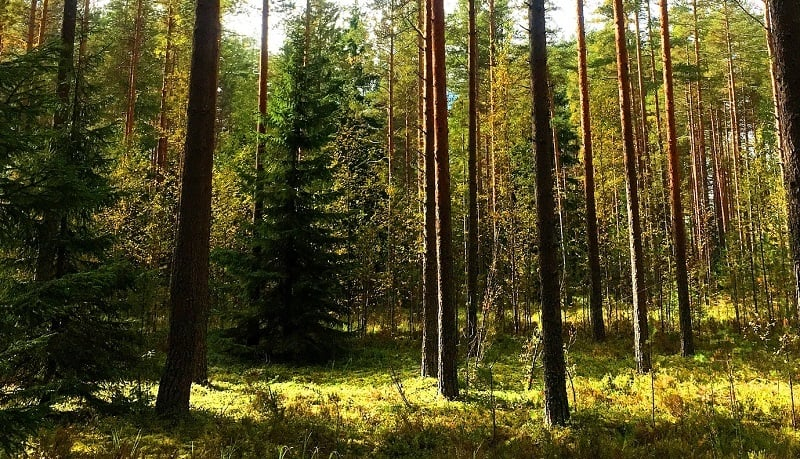 metsä metsätalous puusto talous