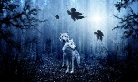 wolf-2864647_960_720