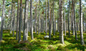 metsä ympäristö puut metsäteollisuus talous