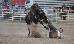 hevonen ratsastaja tulosvaroitus riski romahdus epäonnistuminen romahdus