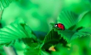 Vihervasemmisto talousratkaisu leppäkerttu kasvit