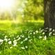 kesä aurinko kukat metsä luonto