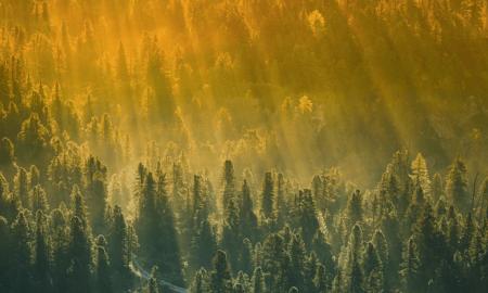 metsä luonto ympäristö puut aurinko