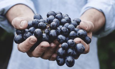 tuotto sijoitus korko osinko viinirypäleet sato