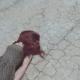 asfaltti lepo pimeys talous