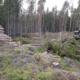 metsä metsäkone raivaus metsätyöt metsäteollisuus metsätalous