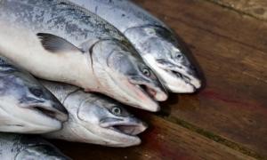 lohi kala kalatalous talous