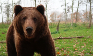 karhumarkkina karhu laskusuhdanne laskutrendi pörssi sijoittaminen