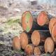 tukkipuu metsätalous metsäteollisuus