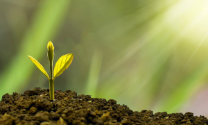 kasvu tuotto sijoitustuotto kasvi