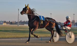ravit hevonen ravihevonen uhkapeli uhkapelaaminen raha