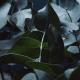eukalyptus Spinnova